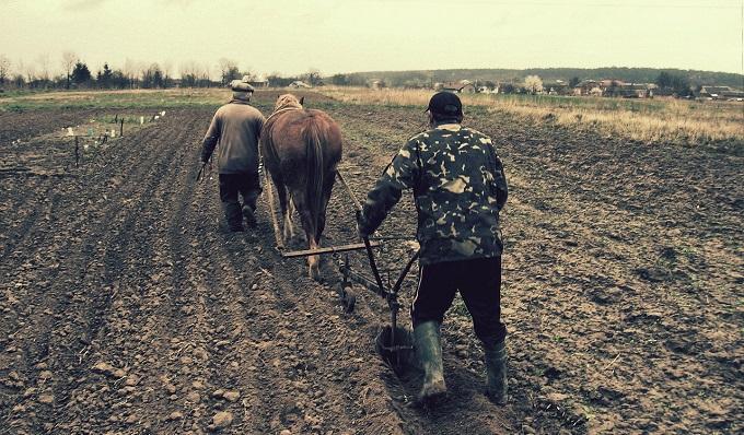 В Госдуме приняли закон о садоводах и огородниках