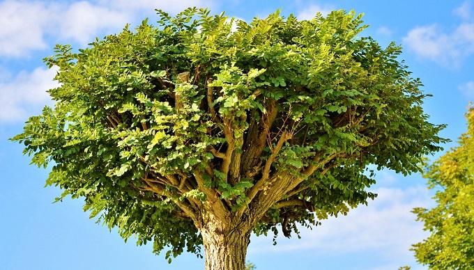 Петербургские коммунальщики «озеленили» деревья, при помощи скотча