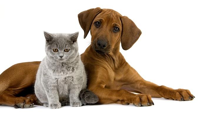 Содержание домашних животных влетит в копеечку