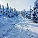 Россиянам могут разрешить самим рубить елки к Новому году