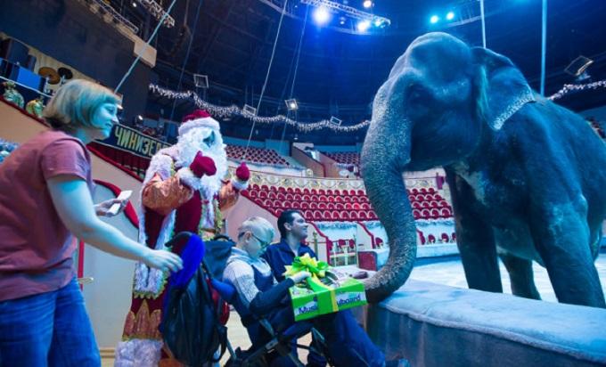 Подарок от настоящего слона