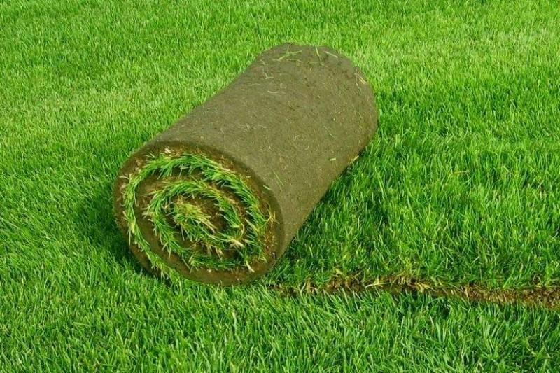 Лучшее решение для покупки газона