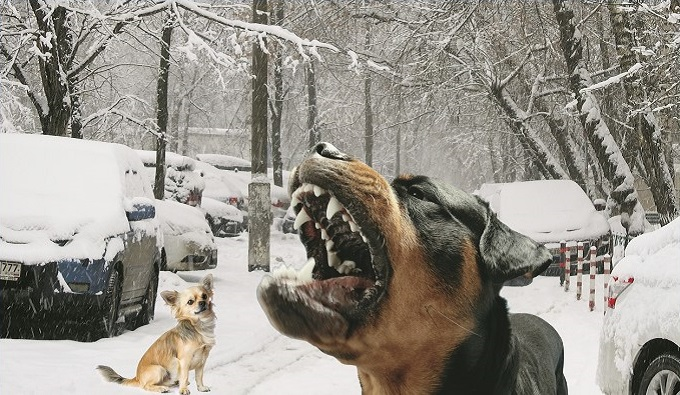 Не ваше собачье дело...