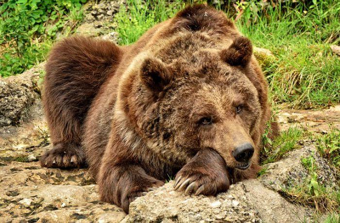 Большой каталог изображений животных