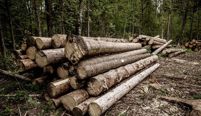 К лесам у нас отношение варварское
