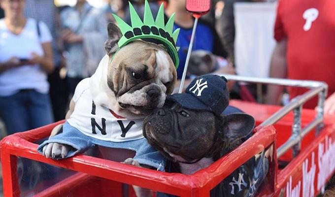 В Москве пройдет первый костюмированный парад собак