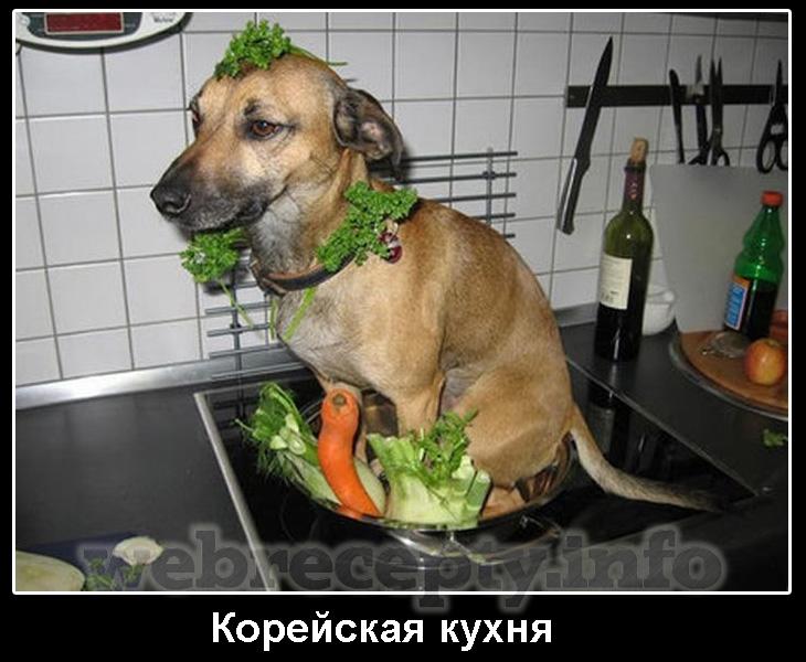 Животные на кухне