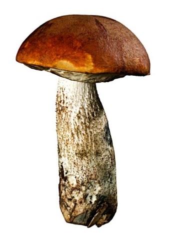 Как готовить грибы