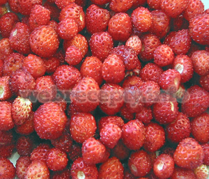 Штрудель с ягодами (2 рецепта)